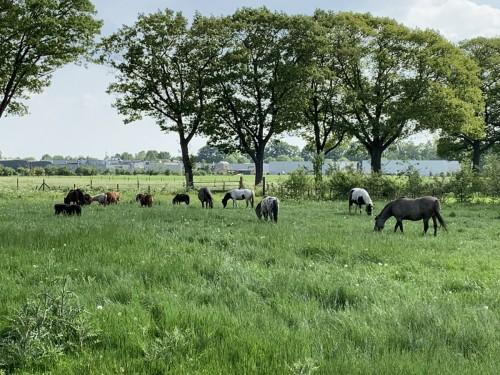 paarden-wei-spankeren