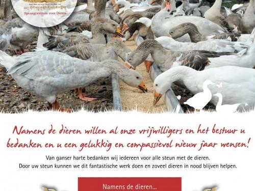 nieuwjaarswens-aika-2019-nederland