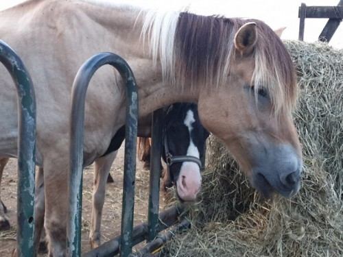 paarden-hooi-spankeren