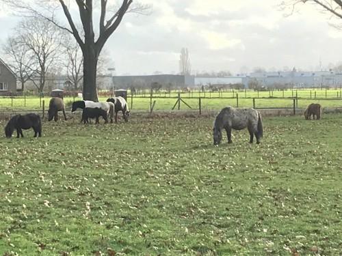 Paarden in spankeren